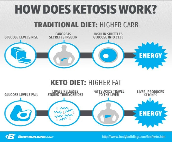 The Ketogenic Diet A Detailed Beginner's Guide